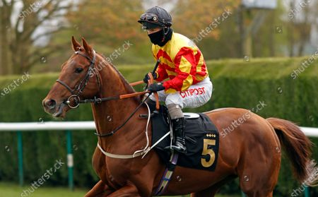 Stock Photo of SIR RON PRIESTLEY (Franny Norton) winner of The Mansionbet Barry Hill Further Flight Stakes Nottingham