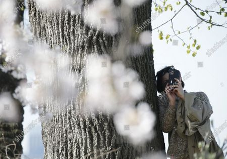 Revelers stop to photograph Cherry Blossom trees that are in bloom near Jacqueline Kennedy Onassis Reservoir in Central Park in New York City on Thursday, April 8, 2021.