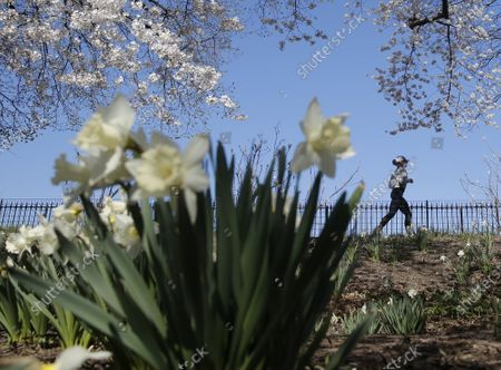 Joggers and pedestrians move along the path surrounding Jacqueline Kennedy Onassis Reservoir surrounded by Cherry Blossom trees and flowers that are in bloom in Central Park in New York City on Thursday, April 8, 2021.