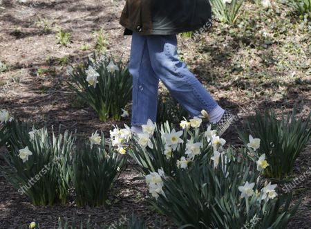 A pedestrian walks among flowers that are in bloom near Jacqueline Kennedy Onassis Reservoir in Central Park in New York City on Thursday, April 8, 2021.