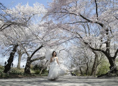 Content creator Peony Lee poses for photos from her photographer while on a path that runs along Jacqueline Kennedy Onassis Reservoir surrounded by Cherry Blossom trees that are in bloom in Central Park in New York City on Thursday, April 8, 2021.