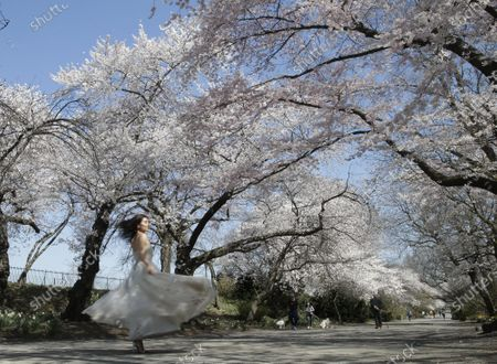 Editorial photo of Cherry Blossom Trees in Central Park, New York, USA - 08 Apr 2021