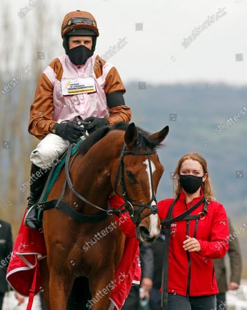 FAIVOIR (Harry Skelton) after The Join Racing TV Now Novices Hurdle Cheltenham