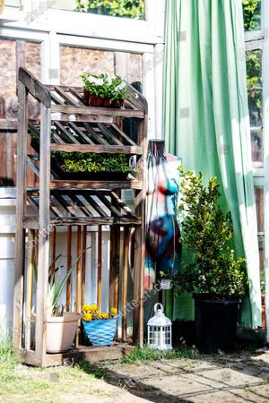 Editorial picture of Trevor Morris and Jenny Grosso built a greenhouse and social gathering area from unwanted windows during Covid-19, Atwater Village, Los Angeles, California, United States - 18 Mar 2021