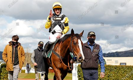Stock Image of WIN MY WINGS (Nick Scholfield) after The Catesby Estates PLC Mares Handcap Chase Cheltenham