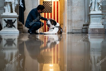 Rep. Andy Kim (D-NJ) pets Officer Clarence, a Saint Bernard with the Greenfield (Mass.) Police Department in the Rotunda of the U.S. Capitol Building on Thursday, April 15, 2021 in Washington, DC. Officer Clarence is the Nation's first official Police Comfort Dog, and started with the Greenfield Police in 2013. (Kent Nishimura / Los Angeles Times)
