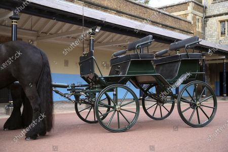 The driving carriage and two Fell ponies, Balmoral Nevis and Notlaw Storm, belonging to Britain's Prince Philip is pictured at Windsor Castle, England, . The Duke's love of carriage-driving is to be a central feature of his funeral on Saturday when the carriage and ponies will be present with two of his grooms in the Quadrangle of Windsor Castle during the procession. The four wheeled carriage was designed by The Duke of Edinburgh eight years ago