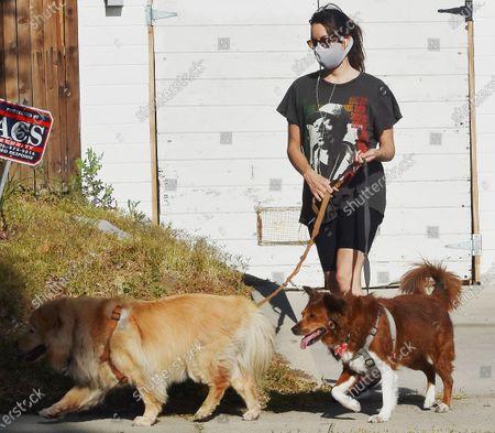 Stock Photo of Aubrey Plaza walking her dogs