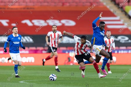 Rhian Brewster of Sheffield United battles with Danny Welbeck of Brighton and Hove Albion during the Premier League match between Sheffield United and Brighton and Hove Albion at Bramall Lane, Sheffield on 24th April 2021.