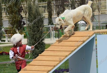 Stock Photo of Man dressed in a national costume performs with his border guard shepherd dog Alabay during Dog Day celebration in Ashgabat, Turkmenistan, . The Central Asian nation of Turkmenistan has celebrated its new state holiday honoring the native Alabay dog breed. President Gurbanguly Berdymukhamedov established the holiday to be observed on the same day that Turkmenistan lauds its Akhla-Teke horse, a breed known for its speed and endurance