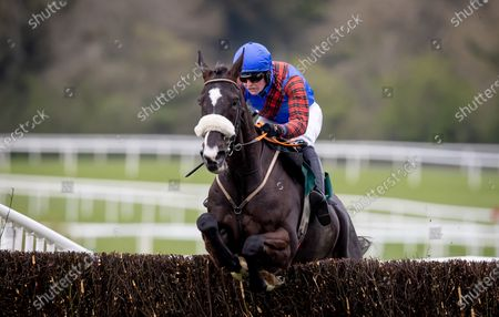 Stock Photo of The Paddy Power Hunters Steeplechase for the Bishopscourt Cup. Tom Hamilton on Rewritetherules wins