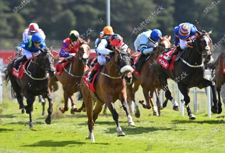(C) Falcon Eight (Frankie Dettori) wins The tote+ Chester Cup Handicap Stakes.Photo © Hugh Routledge.