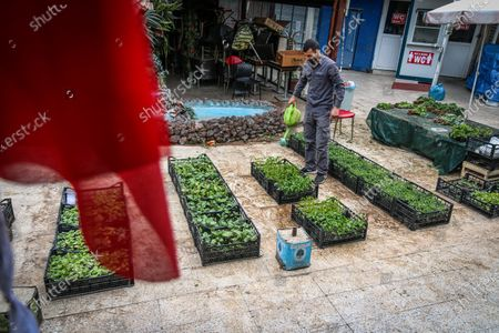 A man wearing a face mask is seen watering plants.After an increase in COVID-19 cases in Turkey, President Recep Tayyip Erdogan declared a 17 day curfew after the cabinet meeting on April 29.