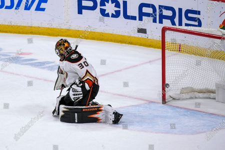 Stock Photo of The puck passes by Anaheim Ducks goalie Ryan Miller for a goal by Minnesota Wild center Victor Rask during overtime of an NHL hockey game, in St. Paul, Minn. The Wild won 4-3