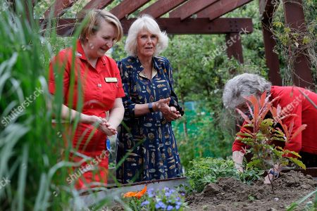 Camilla, Camilla Duchess of Cornwall helps to plant a shrub with Kate Green, right, and Michelle Johnson Director of Nursing, left, as she visits the hospital gardens during a visit on International Nurse Day to Whittington Hospital in London