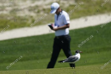 Matt Jones marks his scorecard as he passes a gull on the 16th hole during the first round of the PGA Championship golf tournament on the Ocean Course, in Kiawah Island, S.C
