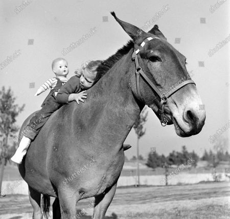 Child riding on a horse with a toy, California, 1950.