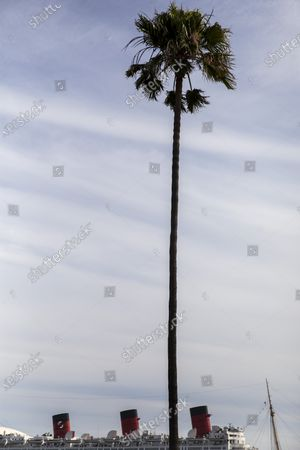 A palm tree at Shoreline Aquatic Park is seen in the foreground, with the Queen Mary ship in the distance, docked in Long Beach, CA, photographed Tuesday, May 25, 2021. The ship has been a tourist destination and hotel for years and is now in danger of capsizing according to a recent inspection report. (Jay L. Clendenin / Los Angeles Times)