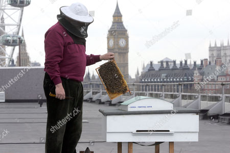 John Chapple Bee Keeper At The Royal Festival Hall ... Buzzing High Above The London Rooftops Are These The Most Cultured Bees In Britain? Their Home Is On The Roof Of Royal Festival Hall ?in A Scale Model Of The Hall Itself Named Royal Festival Hive ? Where They Are Being Treated To An Exclusive Programme Of Cultural Events. They Had A Poetry Reading From The Southbank Centre's Artist-in-residence Lemn Sissay To Mark The First Day Of Spring And Over Coming Months Will Be Visited By Artists Musicians And Writers. But The 15 000-strong Hive Is More Than An Offbeat Arts Project ? It Is An Experiment In City Farming Dreamed Up By Film-makers Andrew Hinton An Artist-in-residence At The Southbank Last Year And Mikey Tomkins. Hinton Said: 'mikey Is Very Interested In Urban Agriculture And The Idea Of Growing Food In Cities Using Spaces Like Rooftops.' At First Glance The Area Seems Too Much Of A Concrete Wasteland To Offer The Bees Much Pollen But There Is Greenery Nearby ? The Coin Street Community Gardens Churchyards Trees Across The River St James's Park And Even Windowboxes. John Chapple Chairman Of The London Beekeepers' Association And Caretaker Of The Hive Reckons London Honey Is Among The Best. 'just As London Is A Multitude Of People London Honey Is A Multitude Of Flavours ' He Said.