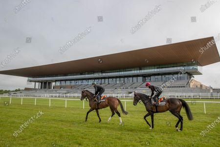 Editorial photo of Contenders prepare for Dubai Duty Free Irish Derby with racecourse gallop, The Curragh, Co. Kildare - 06 Jun 2021