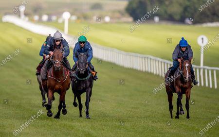 Editorial image of Contenders prepare for Dubai Duty Free Irish Derby with racecourse gallop, The Curragh, Co. Kildare - 06 Jun 2021