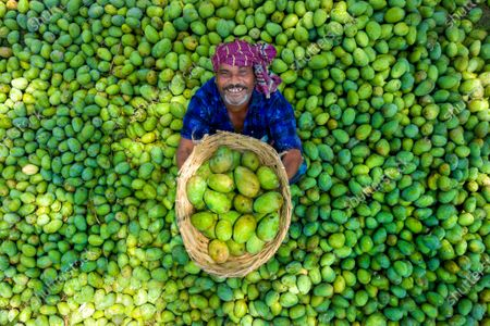 Mango market in northern Bangladesh