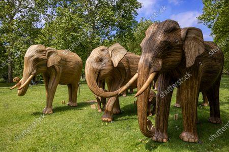 CoExistence Elephant family migration, Green Park
