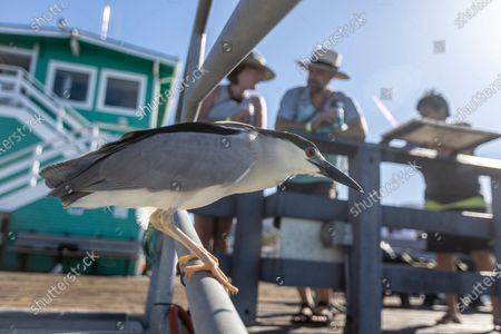 A bird watches summer vacationers fish on the The Green Pleasure Pier Friday, June 25, 2021 in Catalina Island, CA. (Allen J. Schaben / Los Angeles Times)