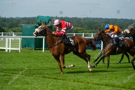 Stock Photo of Jockey David Probert wins the Berenberg October Club Supporting Cares Family Fillies Handicap Stakes on horse Havagomecca (Red and white stripped silks and pink cap)