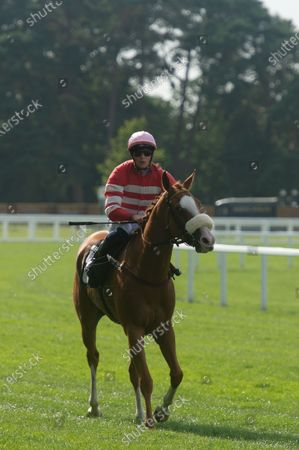Stock Picture of Jockey David Probert wins the Berenberg October Club Supporting Cares Family Fillies Handicap Stakes on horse Havagomecca (Red and white stripped silks and pink cap)