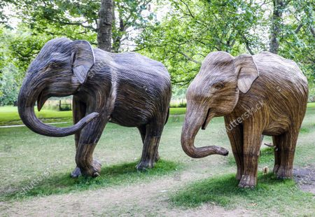 Stock Photo of Life-size elephant sculptures spend their last day displayed in London's Green Park as part of CoExistence, an environmental art campaign produced by Elephant Family a charity that works to save endangered Asian wildlife from extinction. The charity was founded by The Duchess of Cornwall late brother, Mark Shand.