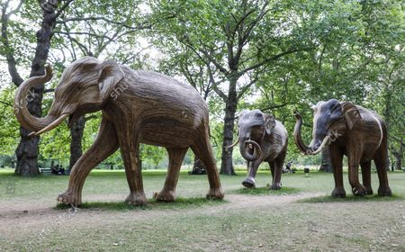 Stock Image of Life-size elephant sculptures spend their last day displayed in London's Green Park as part of CoExistence, an environmental art campaign produced by Elephant Family a charity that works to save endangered Asian wildlife from extinction. The charity was founded by The Duchess of Cornwall late brother, Mark Shand.