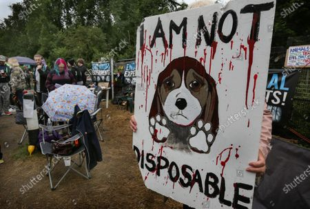 A protester holds an anti animal testing sign during the demonstration.Protesters from all over the country joined Camp Beagle to offer support and remember thousands of puppies produced at MBR Acres over the last 50 years. The activists are going to camp outside the factory until it is closed down and all the beagles are set free. Camp Beagle is a protest camp on the roadside set up four weeks ago outside beagle breeder Marshal BioResources (MBR) Acres. Their puppies are sold into animal testing laboratories. After watching alarming videos of beagle production farms Priti Patel has launched a review of animal testing.