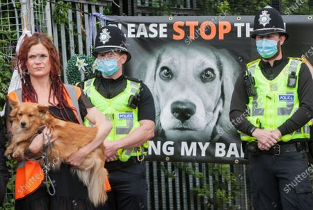 A protester carrying a dog stands with police officers at the factory gate during the demonstration.Protesters from all over the country joined Camp Beagle to offer support and remember thousands of puppies produced at MBR Acres over the last 50 years. The activists are going to camp outside the factory until it is closed down and all the beagles are set free. Camp Beagle is a protest camp on the roadside set up four weeks ago outside beagle breeder Marshal BioResources (MBR) Acres. Their puppies are sold into animal testing laboratories. After watching alarming videos of beagle production farms Priti Patel has launched a review of animal testing.