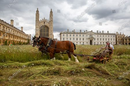 Editorial image of King's College Cambridge wildflower meadow, UK - 02 Aug 2021