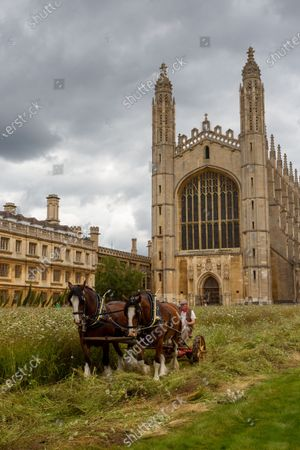 Editorial picture of King's College Cambridge wildflower meadow, UK - 02 Aug 2021