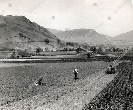 Sowing Oats In The Vale Of St John In The Lake District