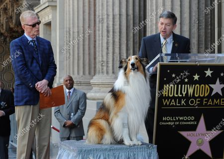Hollywood Walk of Fame CEO Leron Gubler makes comments as CBS news correspondent and New York Times best selling author Bill Geist and canine star Lassie look on during an unveiling ceremony honoring Geist with the 2,437th star on the Hollywood Walk of Fame in Los Angeles on April 15, 2011.