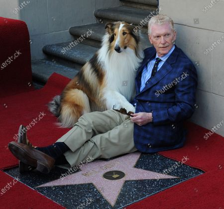 CBS news correspondent and New York Times best selling author Bill Geist poses with canine star Lassie as he is honored with the 2,437th star on the Hollywood Walk of Fame in Los Angeles on April 15, 2011.