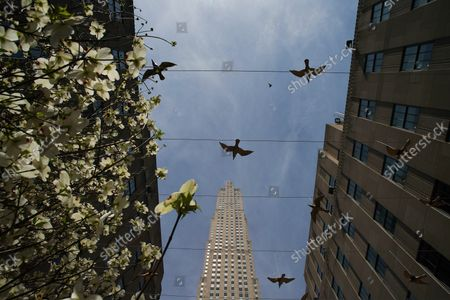 Tress are blooming in early spring at a media preview of the inaugural Frieze Sculpture at Rockefeller Center, a free public art installation featuring 20 sculptures from 14 local and international artists, on April 25, 2019 in New York City. Sculptures from Nick Cave, Aaron Curry, Jose Davila, Walter De Maria, Rochelle Goldberg, Goshka Macuga, Ibrahim Mahama, Joan Miro, Paulo Nazareth, Jaume Plensa, Pedro Reyes, Kiki Smith, Sarah Sze, and Hank Willis Thomas are featured in Frieze Sculpture at Rockefeller Center. Works appear in a variety of indoor and outdoor locations throughout the Center including Rockefeller Plaza, the Channel Gardens, the Rink at Rockefeller Center, North Plaza, and South Esplanade.