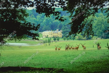 Expansive exterior view of red deer on the park of Wormsley Estate, home of Victoria and J. Paul Getty, Jr., in England.