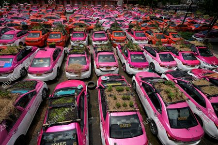 """Stock Picture of Miniature gardens are planted on the rooftops of unused taxis parked in Bangkok, Thailand, . Taxi fleets in Thailand are giving new meaning to the term """"rooftop garden,"""" as they utilize the roofs of cabs idled by the coronavirus crisis to serve as small vegetable plots and raise awareness about the plight of out of work drivers"""