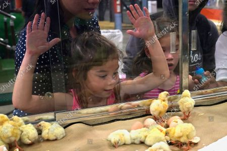 Stock Photo of Six-year-old Claire Lewis, left, and her sister Charlotte Lewis, right, age 8, of Edmond, Okla., watch newly hatched chicks on the opening day of the 2021 Oklahoma State Fair, in Oklahoma City, as the state fair returns following a cancellation in 2020 due to COVID-19