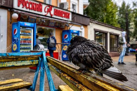 A wet pigeon rests in front of a fast food diner in Voronezh.The pathway on many streets and courtyards is flooded after two days of heavy rainfall in Voronezh. According to the regional hydrometeorological center heavy rains are expected to hold out in the region for a week.