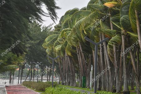Stock Photo of (211013) - HAIKOU, Oct. 13, 2021 (Xinhua) - Trees sway in the strong wind in Haikou, capital of south China's Hainan Province, Oct. 13, 2021. Typhoon Kompasu, the 18th of this year, is forecast to bring strong winds and rain to southern parts of China. It will move westward at a speed of about 30 km per hour and is expected to make landfall in the coastal areas from Qionghai City to Lingshui Li Autonomous County from the afternoon to the night on Wednesday, according to the Hainan provincial meteorological administration.