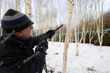 Stock Photo of Head gardener Richard Todd cleaning the trees at Anglesey Abbey