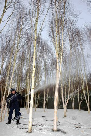 Head gardener Richard Todd cleaning the trees at Anglesey Abbey