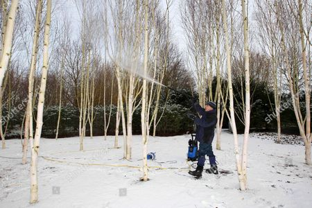 Editorial picture of Cleaning of the Silver Birch trees at Anglesey Abbey, Cambridgeshire, Britain - 30 Nov 2010