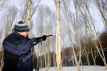 Stock Image of Head gardener Richard Todd cleaning the trees at Anglesey Abbey