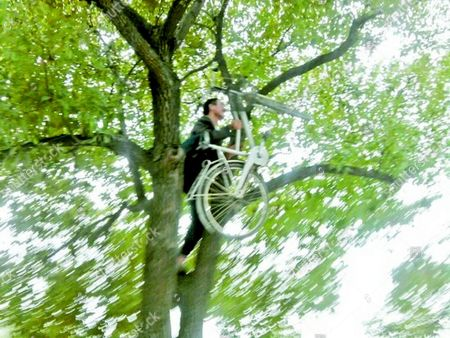 Wang Bing climbs the tree in order to retrieve his bicycle